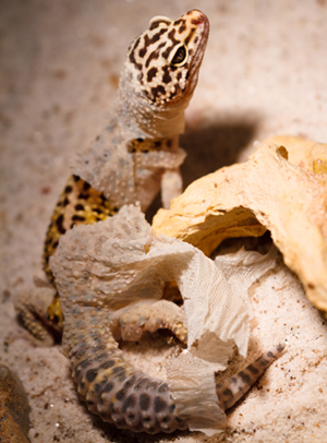 LizardShed